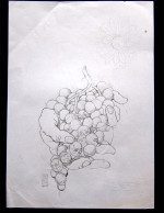 Deso Sketch-Grapes